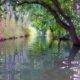 River Ciane - Syracuse